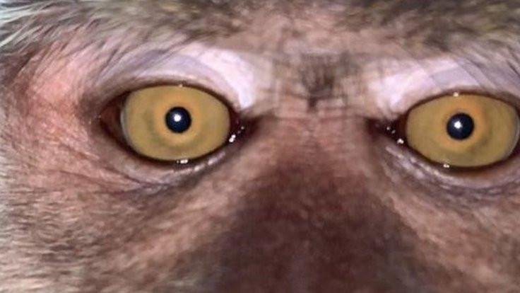 Kaybolan telefondan maymun selfieleri çıktı