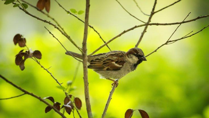 Kuşların ötüşleri değişti