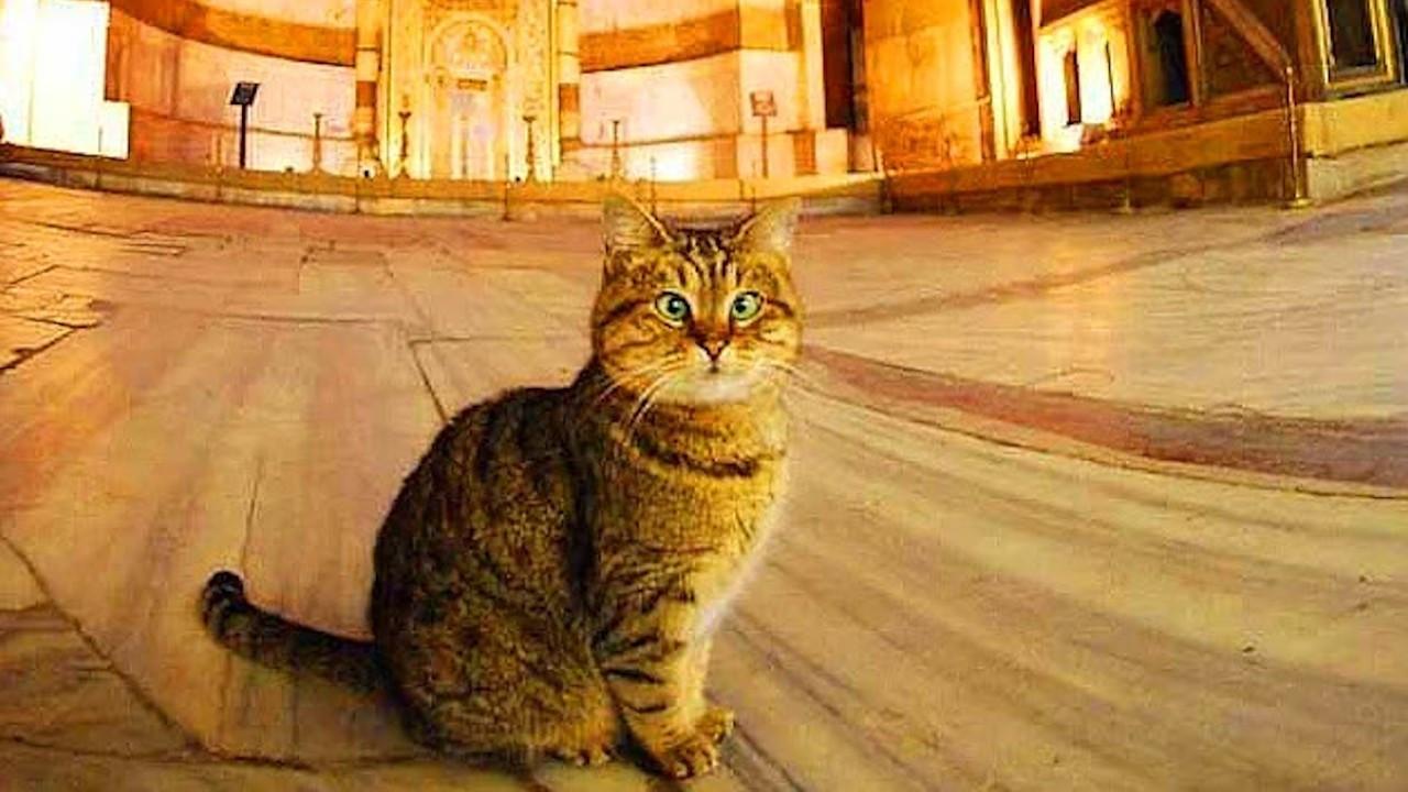 Ayasofya'daki değişim kedi Gli'nin sağlığını bozdu