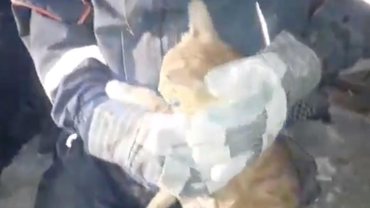 İzmir'de enkazın altında kalan kedi kurtarıldı