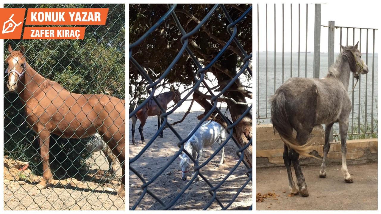Adalar'ın atlarına özgürlük!
