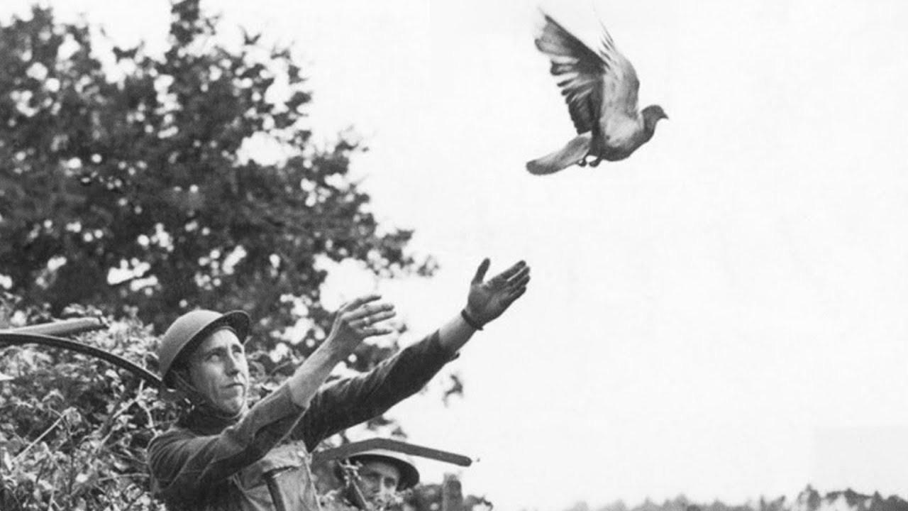 Posta güvercininin düşürdüğü mesaj 110 yıl sonra bulundu