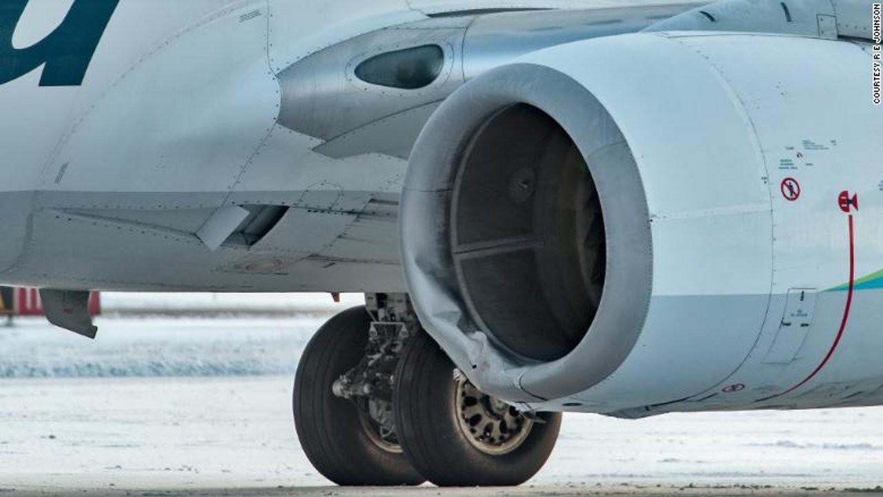 Alaska'da uçağın çarptığı boz ayı öldü