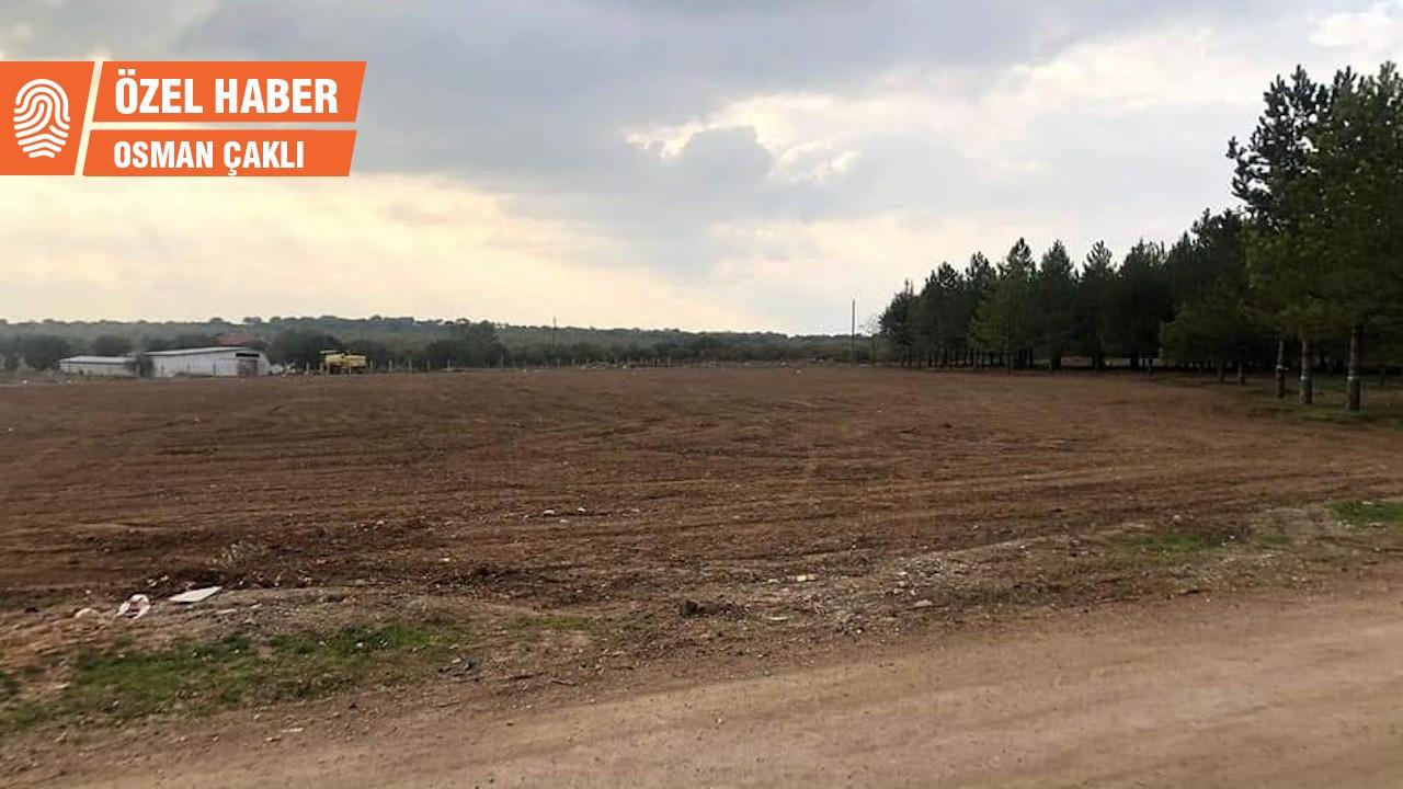 Kızılcasöğüt Belediye Başkanı: Çaresizlikten ağaçları kestik