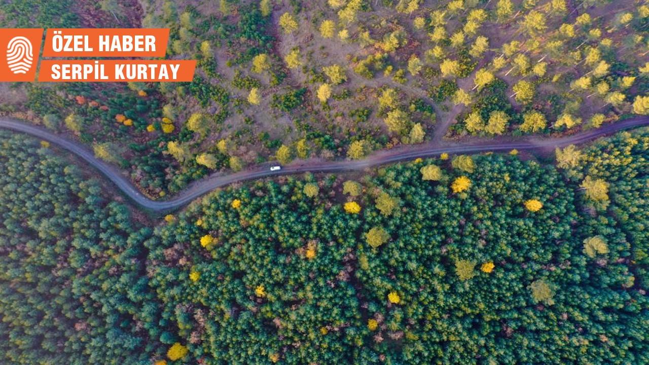 Bilecik'te maden ocağı için 36 bin ağaç kesilecek