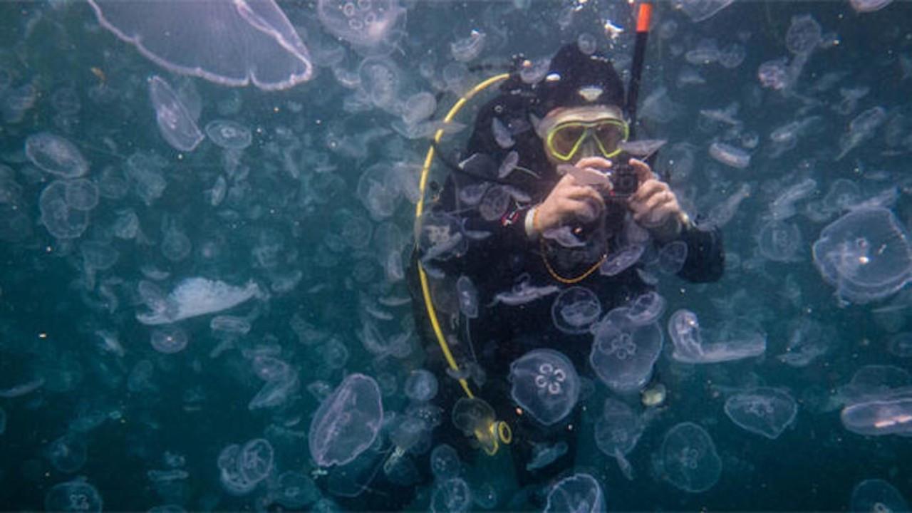 İstanbul Boğazı'nda denizanası istilası