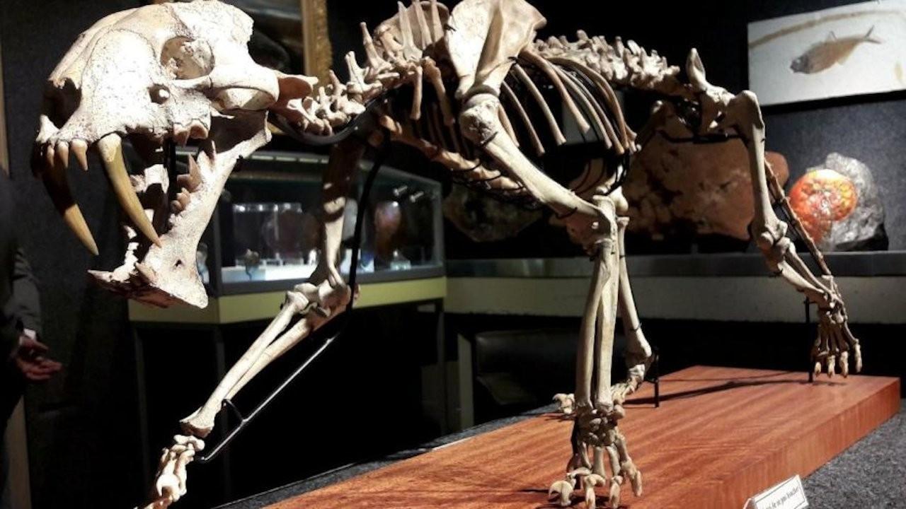 40 milyon yaşındaki iskelet satılacak