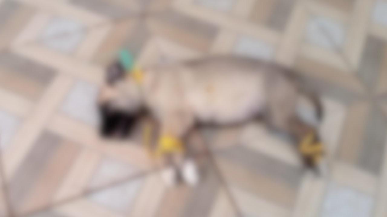 Kaybolan yavru köpek bağlanmış halde ölü bulundu