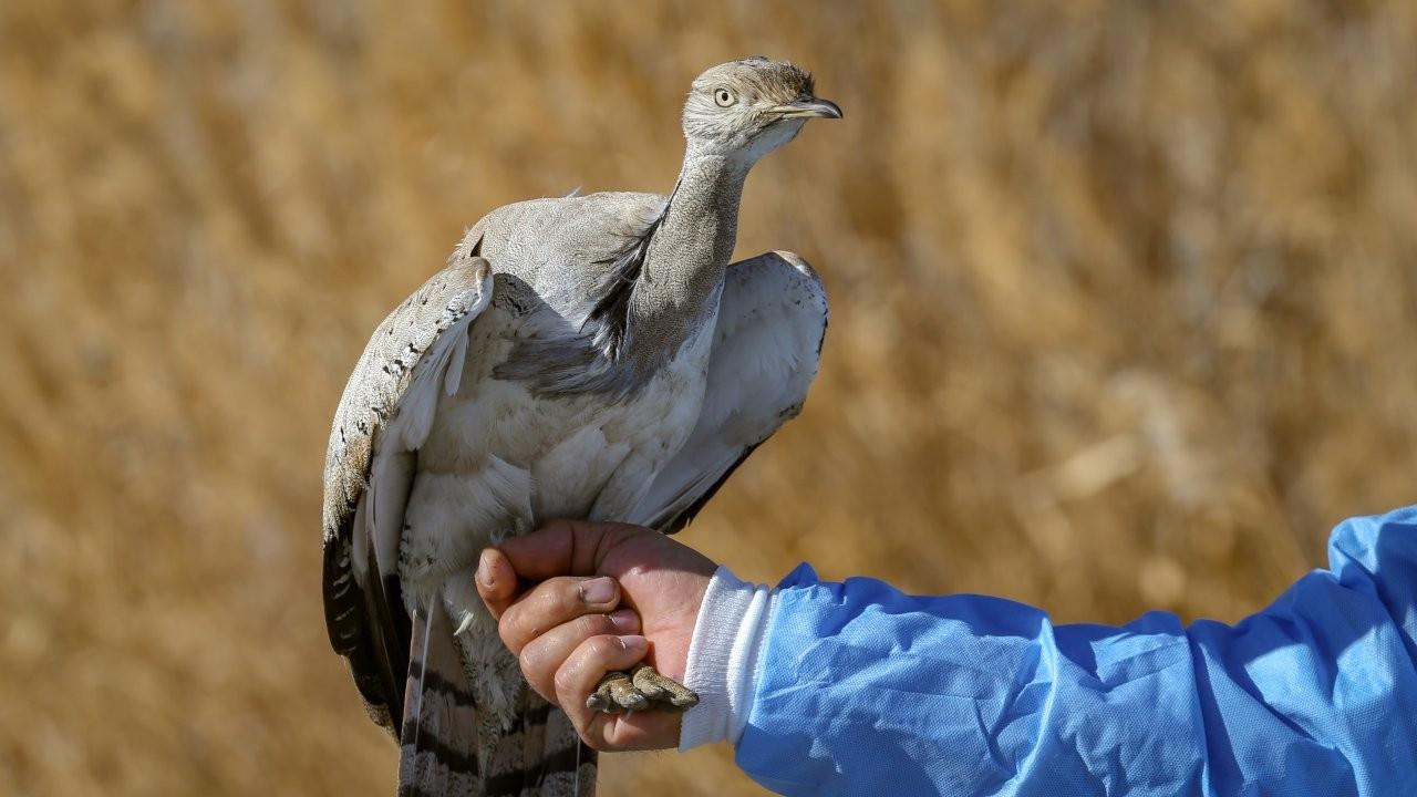 Türkiye'de sadece iki kez görülen yaralı toy kuşu tedaviye alındı