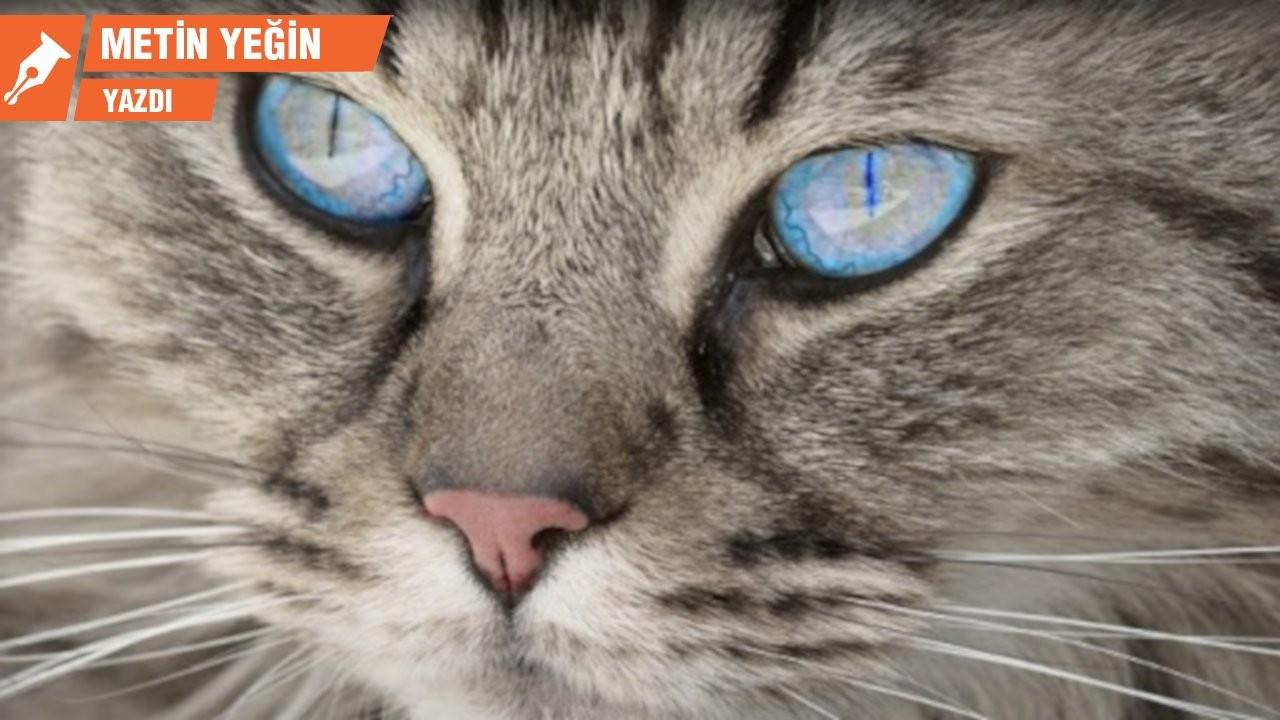 Kedinin adı ne olmalı?