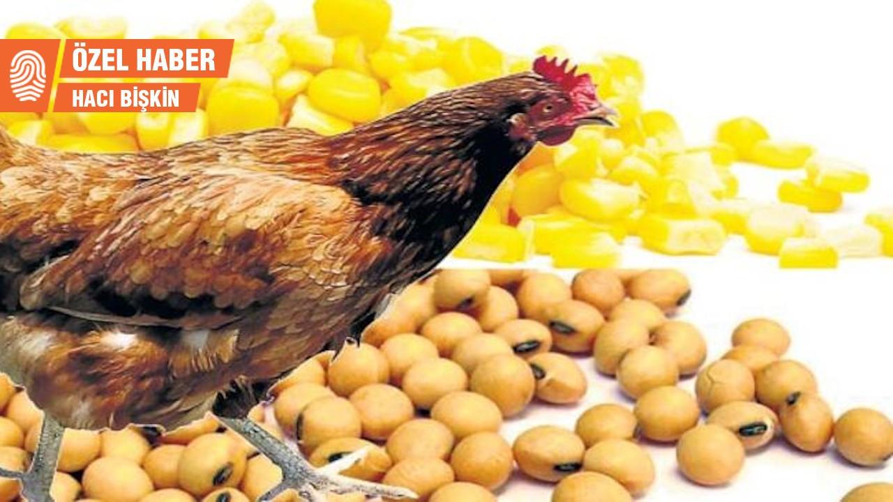 GDO'lu tavuk yemine tepki: Bu bir cinayettir