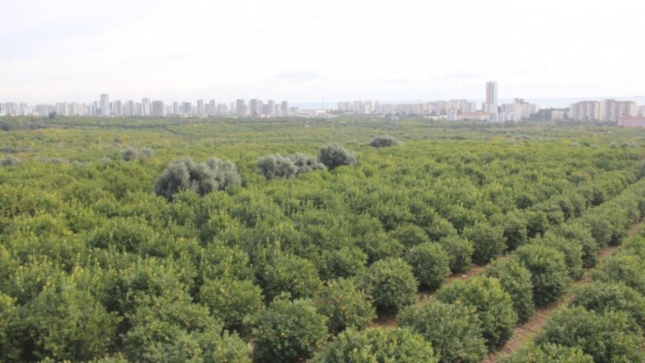 Mersin Mezitli'de 60 bin narenciye ağacı sanayi sitesi için kesilecek