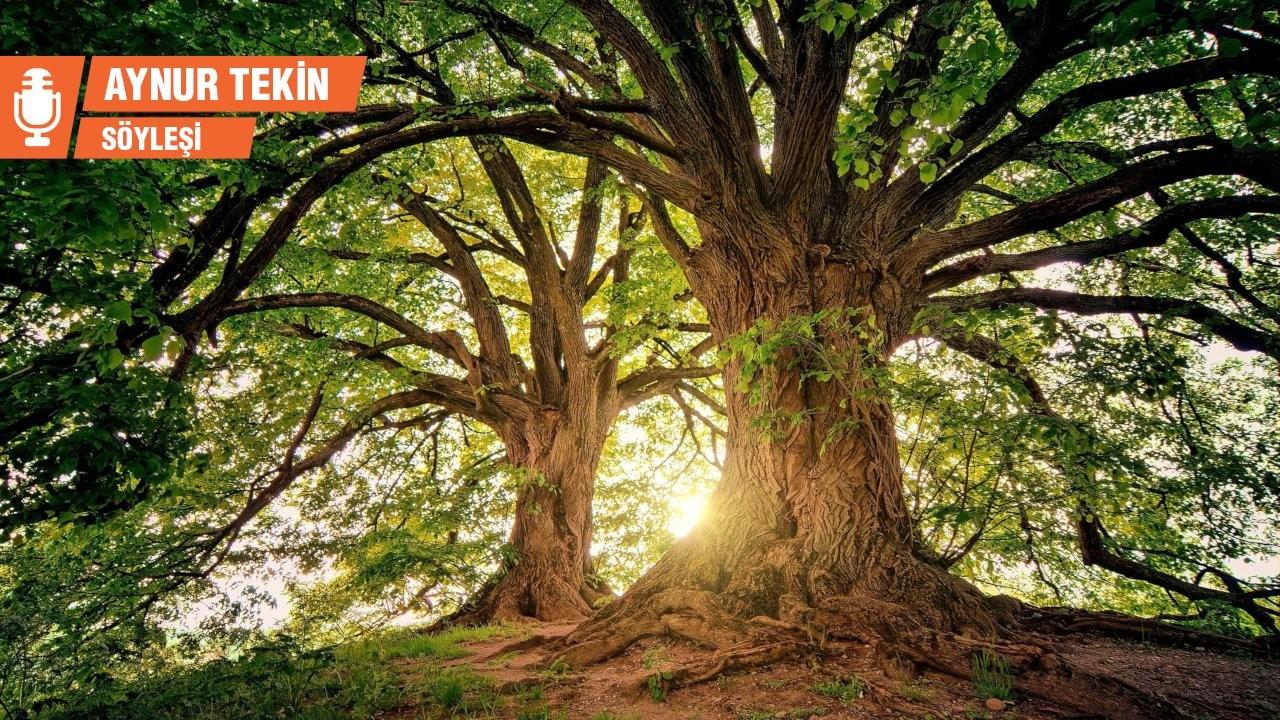 Kağıt üzerinde orman, fiiliyatta turizm tesisi