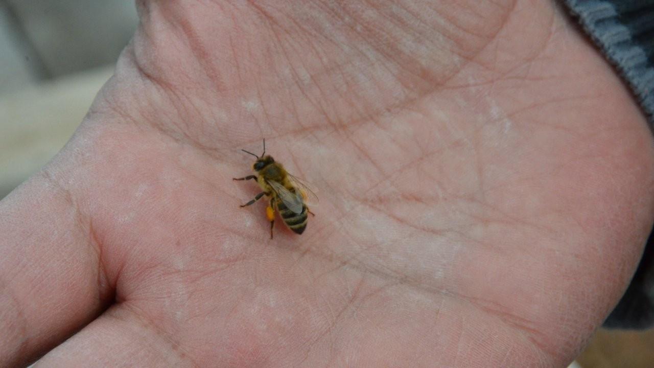İklim değişikliği arıları öldürüyor