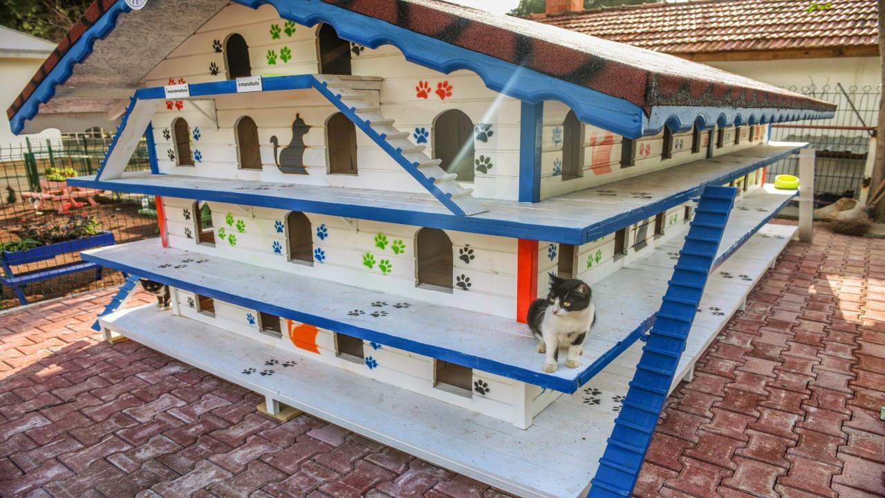 Antalya'da kediler için 3 katlı 64 odalı apartman