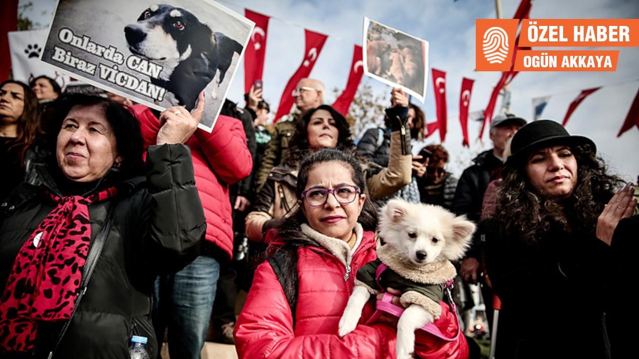 İki hafta içinde gelecekti, yine gelemedi: Hayvan hakları yasası