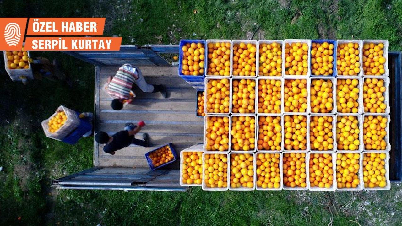 Finike Portakalı'na duble yol tehdidi: Projeye karşıyız