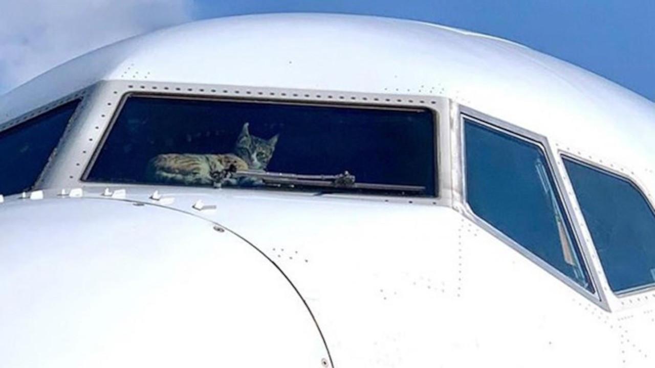 Sudan'da kedi kokpite girip pilotlara saldırdı, uçak acil iniş yaptı