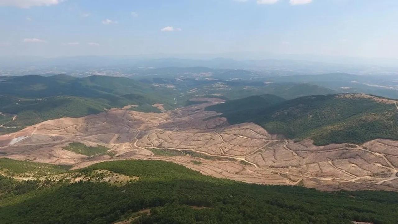 350 bin ağaç kesilmişti: Bakanlık, Alamos Gold'a tazminat davası açsın