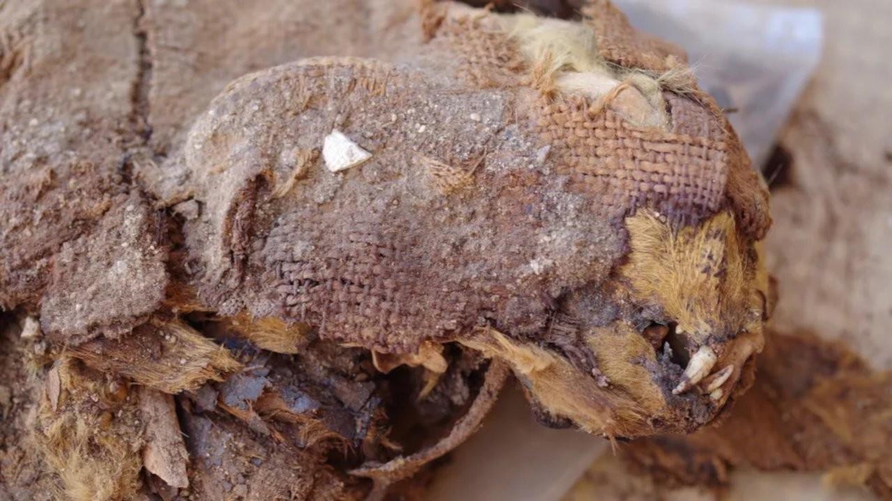 Mısır'da dünyanın en eski 'evcil hayvan mezarlığı' keşfedildi