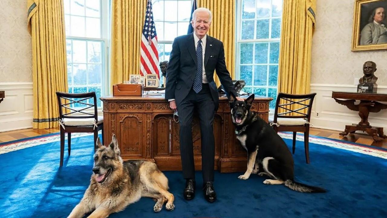 Biden'ın köpeği Beyaz Saray'da bir kişiyi daha ısırdı