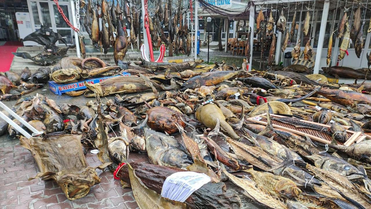 Yıkılan 'müze'deki mumyalanmış balıklar sokakta kaldı