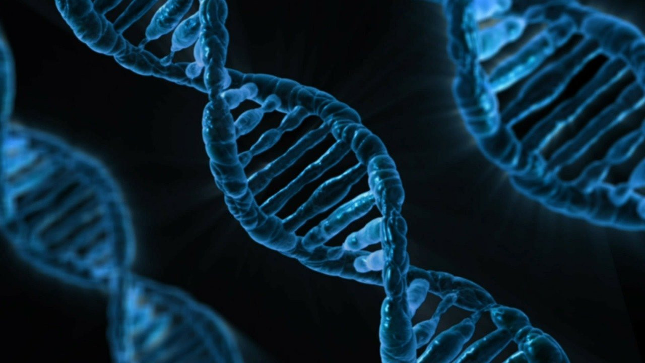 En eski Homo sapiens DNA'sı Neandertal kökenlerimizi ortaya koyuyor