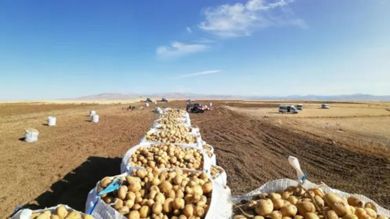 Çiftçinin elindeki 400 bin ton ürün satın alınıp dağıtılacak