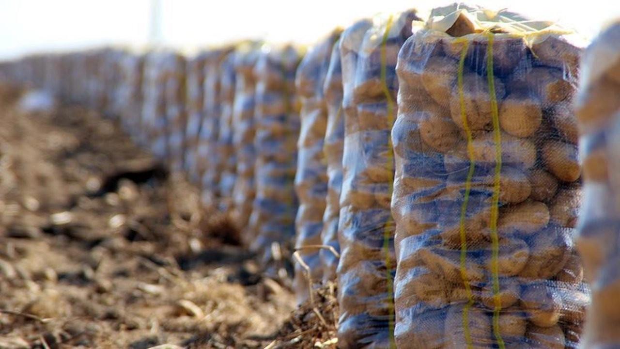 Çiftçi: İş işten geçti devlet patates almaya başladı
