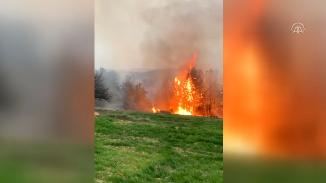 Muğla, İzmir ve Denizli'de orman yangını
