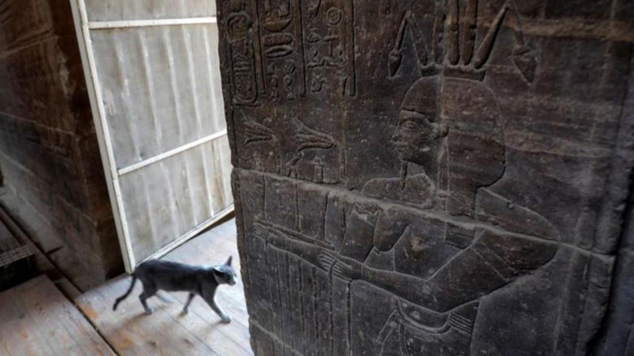 Antik Mısırlılar neden kedilere kafayı takmıştı?
