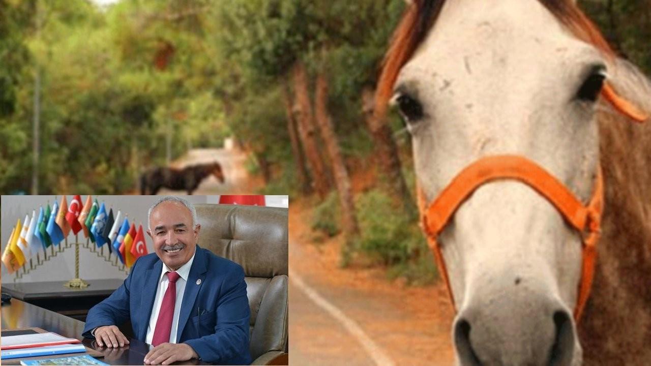 Kayıp atlar soruşturması: Dörtyol Belediye Başkanı MHP'den istifa etti