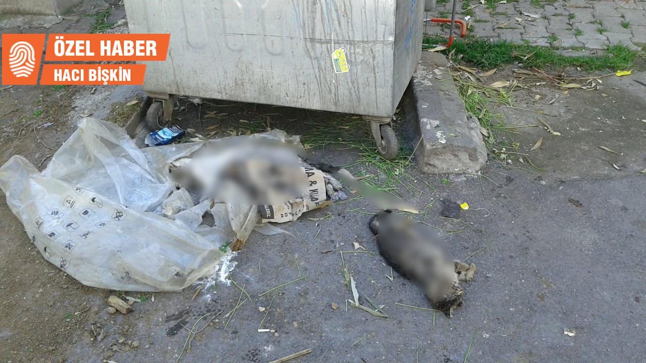 Ataşehir'de kedi katliamı: İnsanlığa sığar mı?