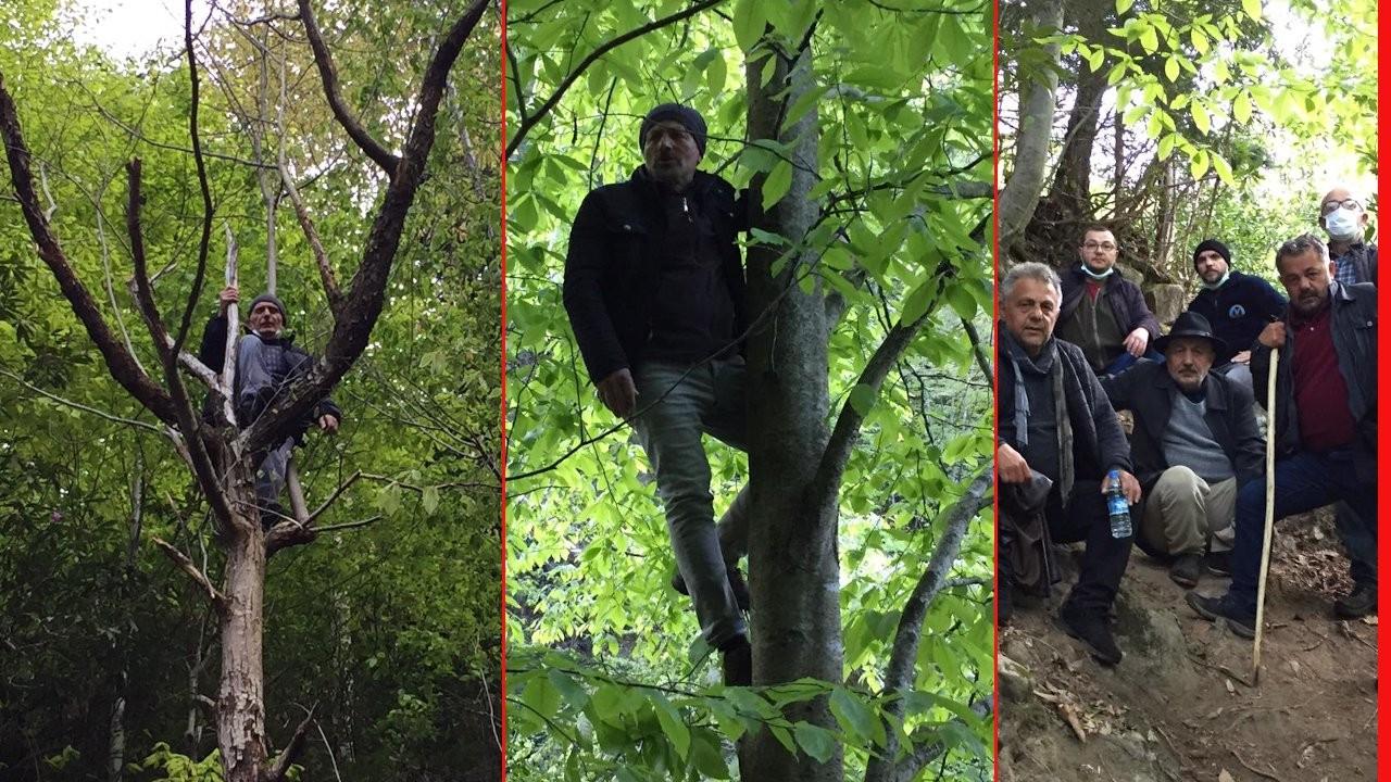 İkizdere'de çevre direnişi: Sökülmelerini önlemek için ağaçlara çıktılar