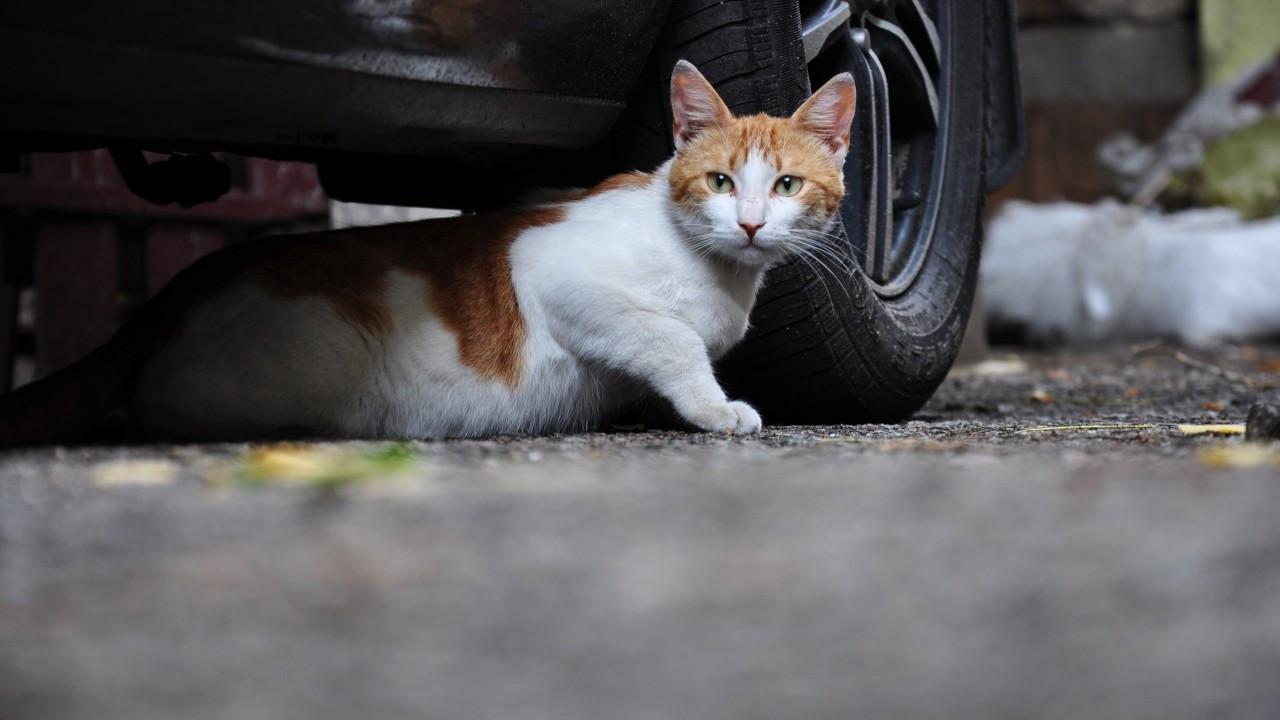 Güney Kore polisi 'seri kedi katili'nin peşinde
