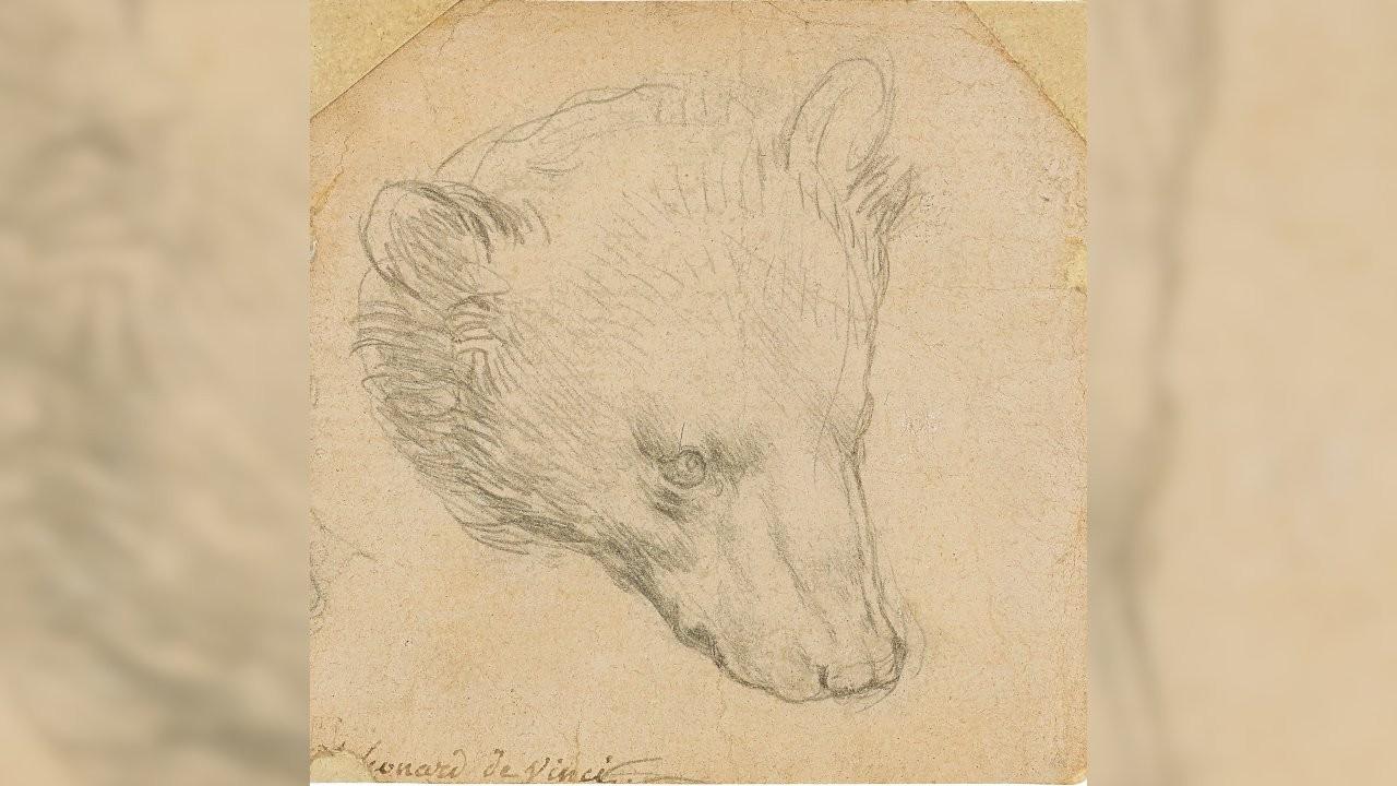 Leonardo da Vinci'nin ayı çizimi açık artırmaya çıkarılacak