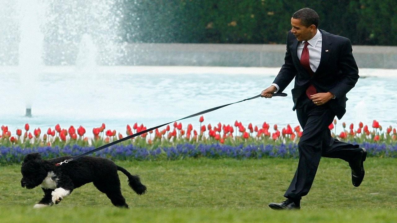 Obama ailesinin köpeği Bo 12 yaşında öldü