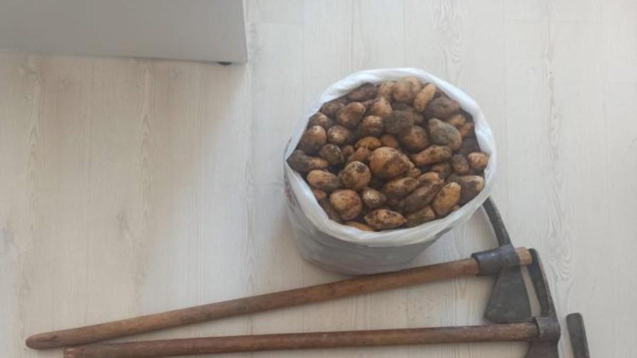Salep soğanı toplayan 5 kişiye 419 bin TL ceza