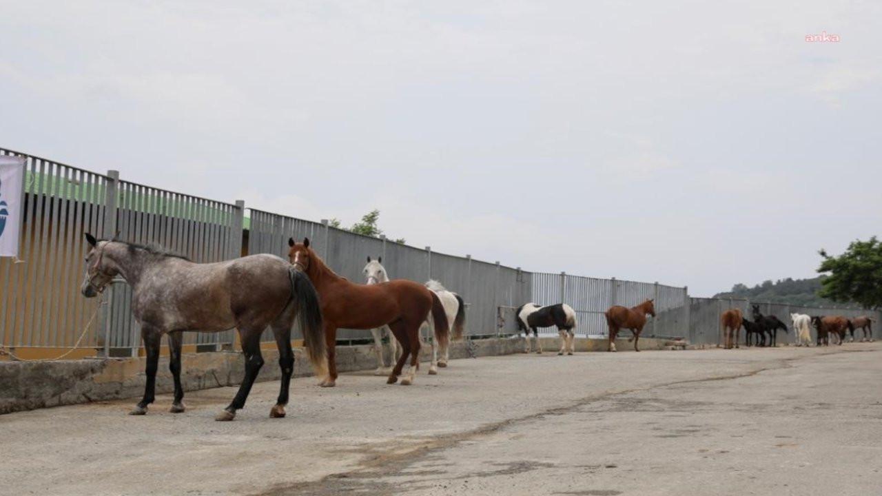 İBB'den Tarım Bakanlığı'na yanıt: Kayıp atların sorumluluğu sizde