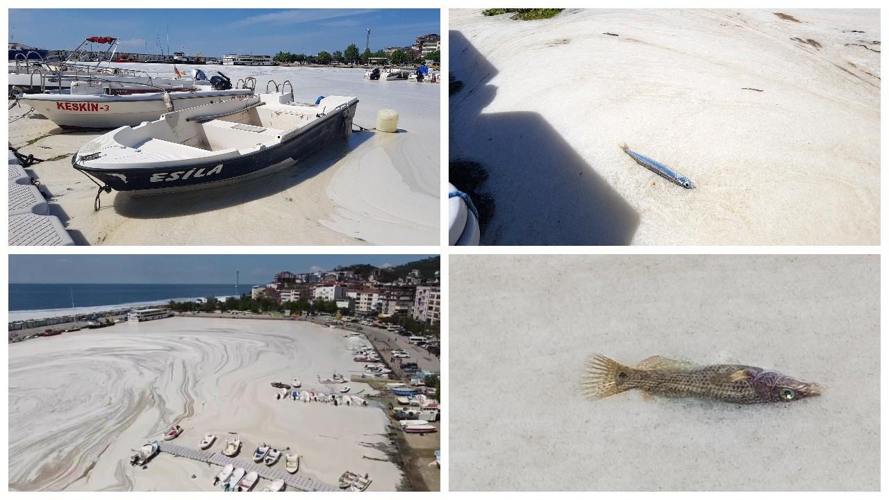 Çınarcık sahili deniz salyasıyla kaplandı