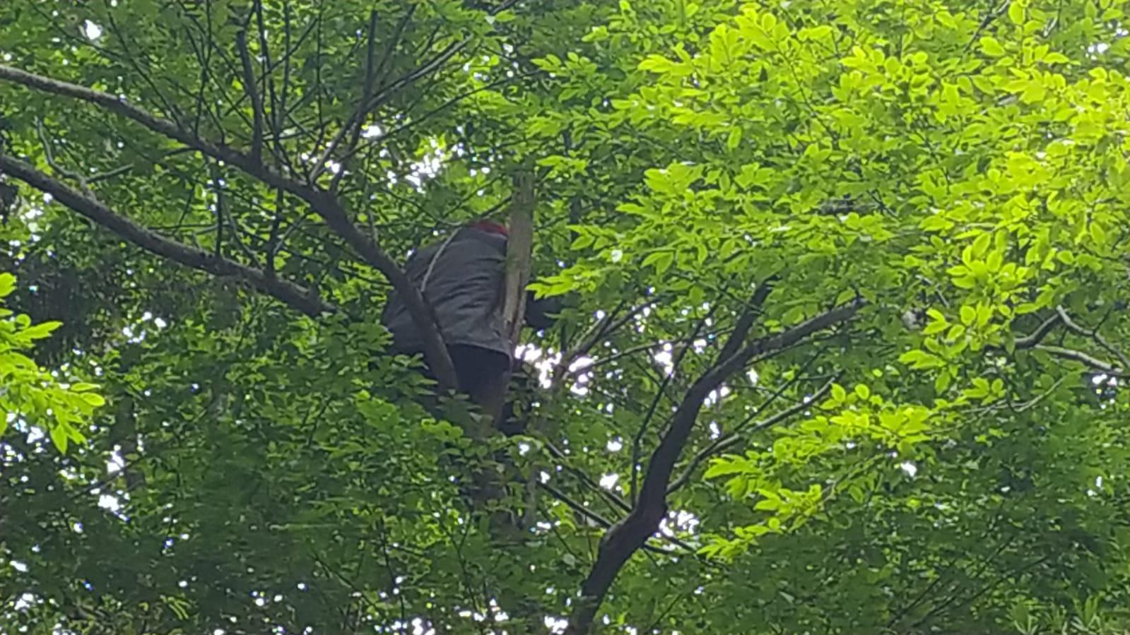 İkizdereliler arı kovanlarını korumak için ağaçlara çıktı