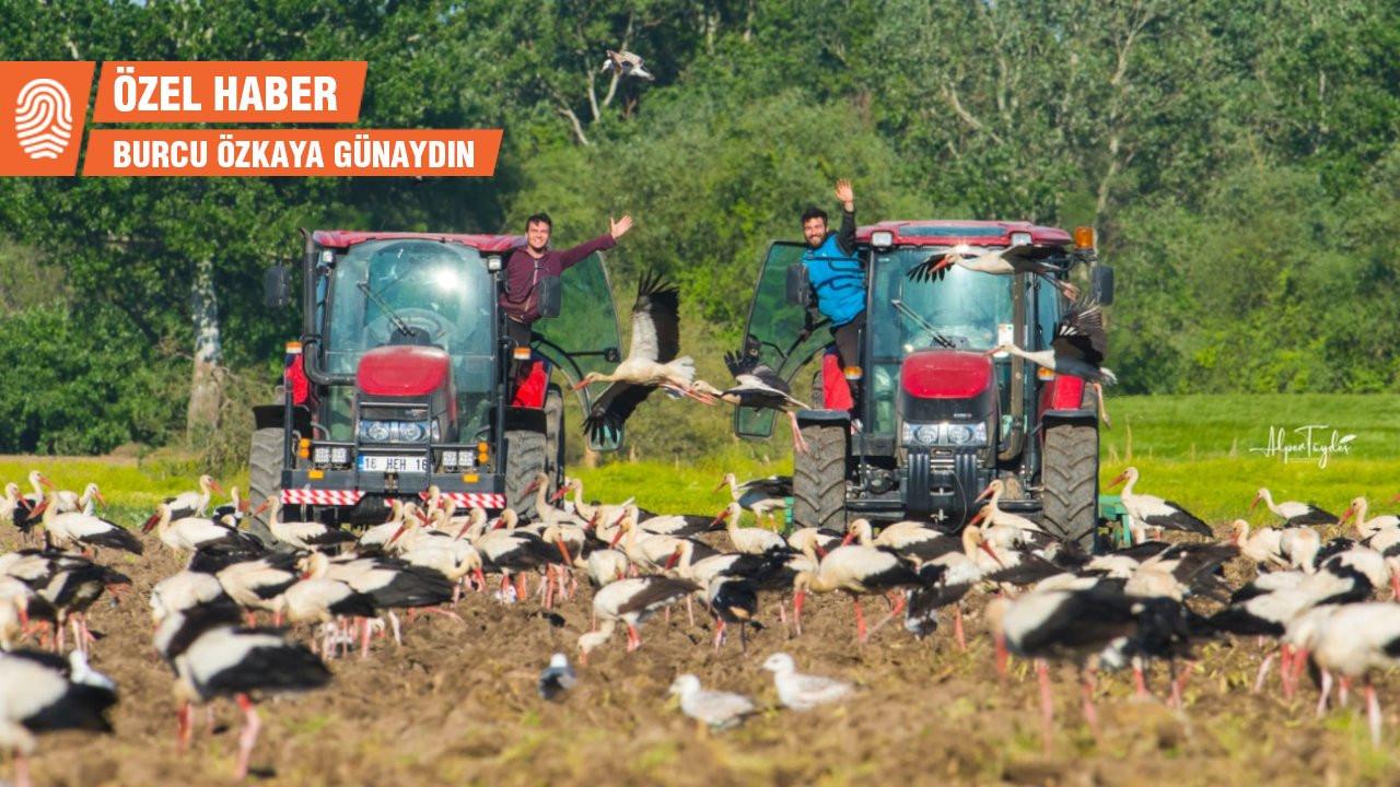 Leylek İstihbarat Teşkilatı: Çiftçi, köylü, çoban leylek peşinde