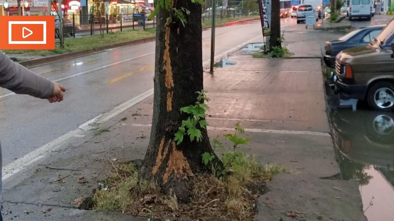 Trabzon'da ağaca yıldırım isabet etmesi kamerada