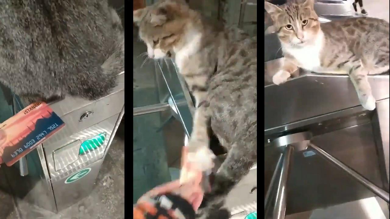 İmamoğlu'ndan İstanbulKart bastırmayan kedi paylaşımı