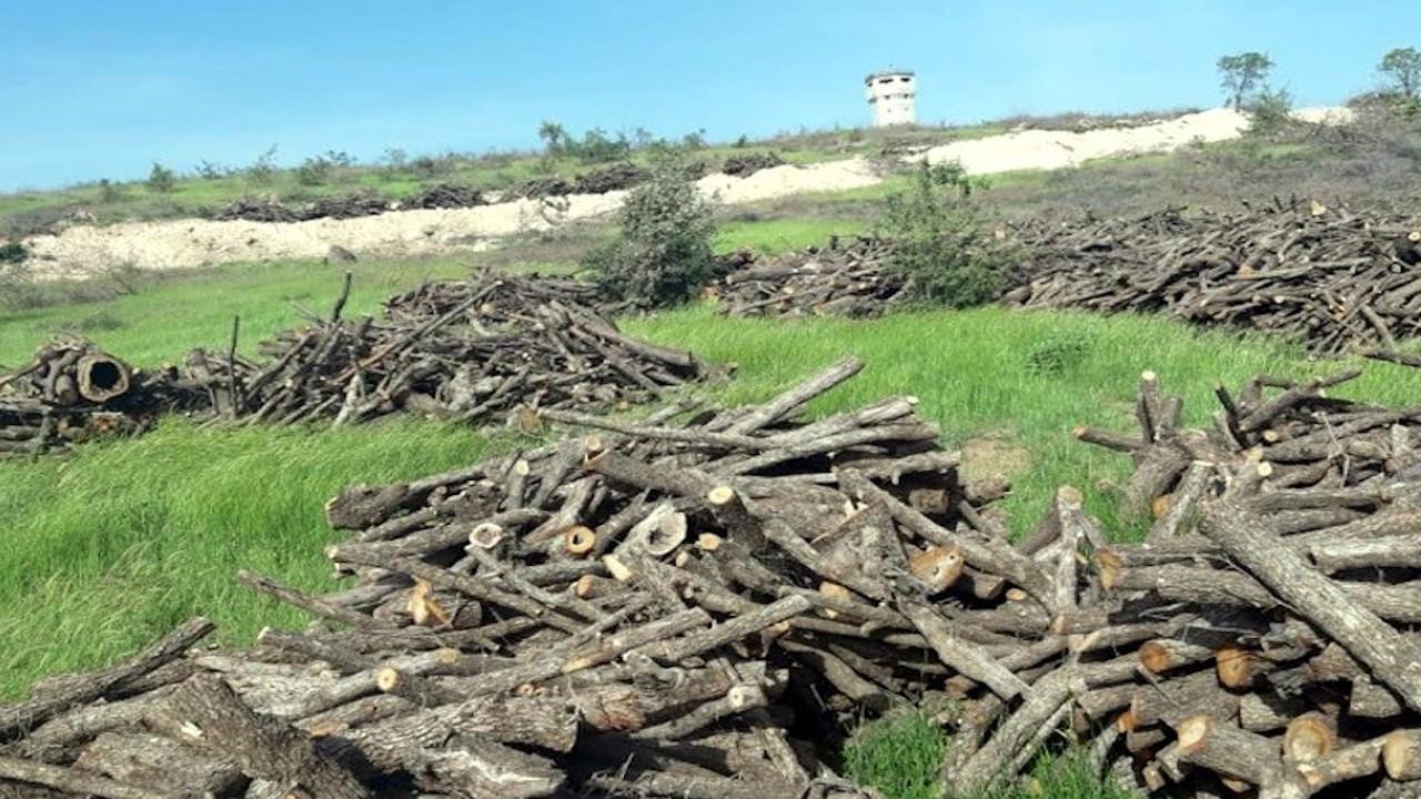 HDP Milletvekili Hüseyin Kaçmaz: Cudi'de günde 400 ton ağaç kesiliyor