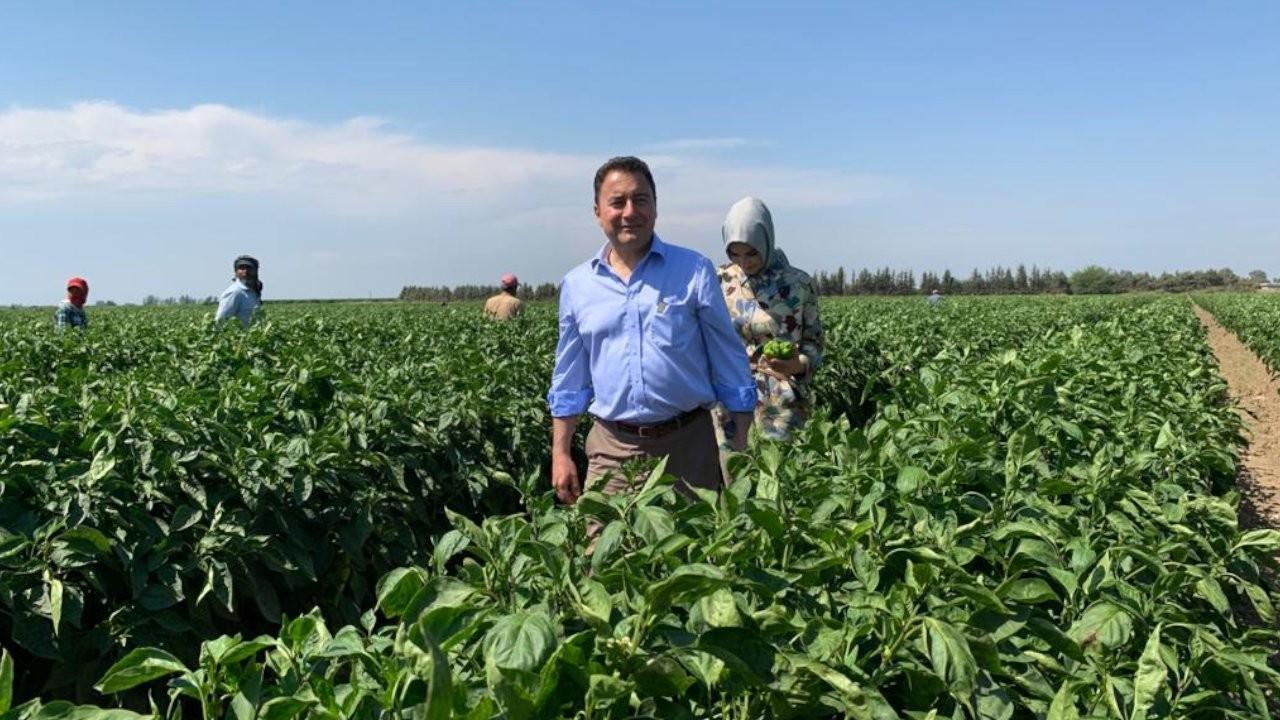 DEVA Partisi Genel Başkanı Ali Babacan tarım işçileri ile buluştu