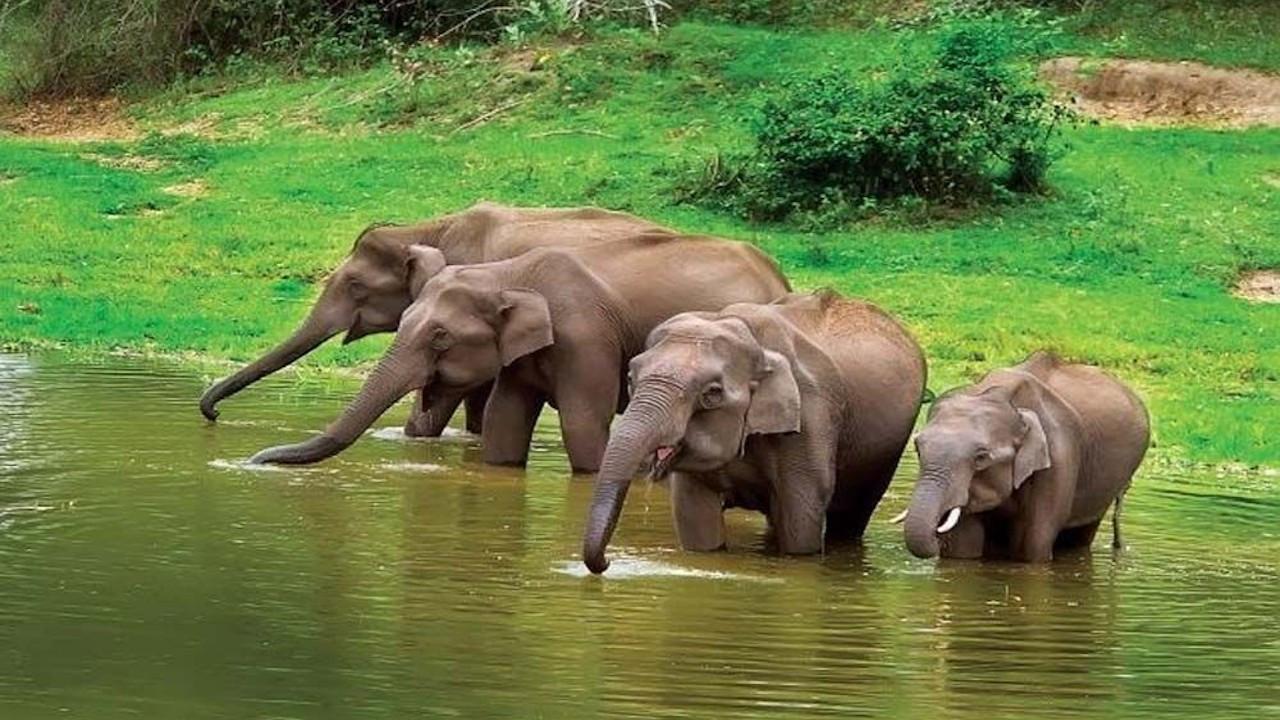 Hindistan'da 28 fil Covid-19'a yakalandı