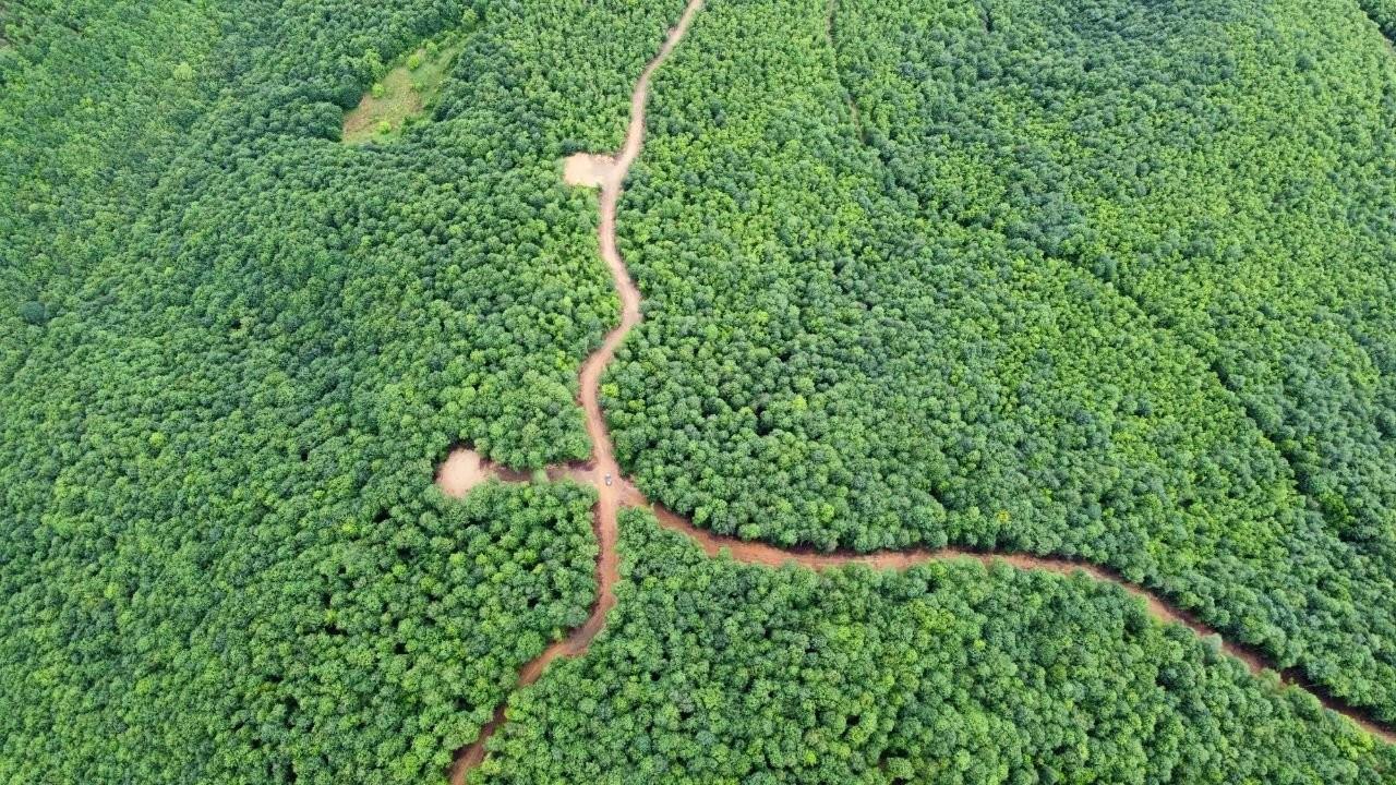 Maden şirketi Şahin Dağları'nı örümcek ağı gibi sarıyor