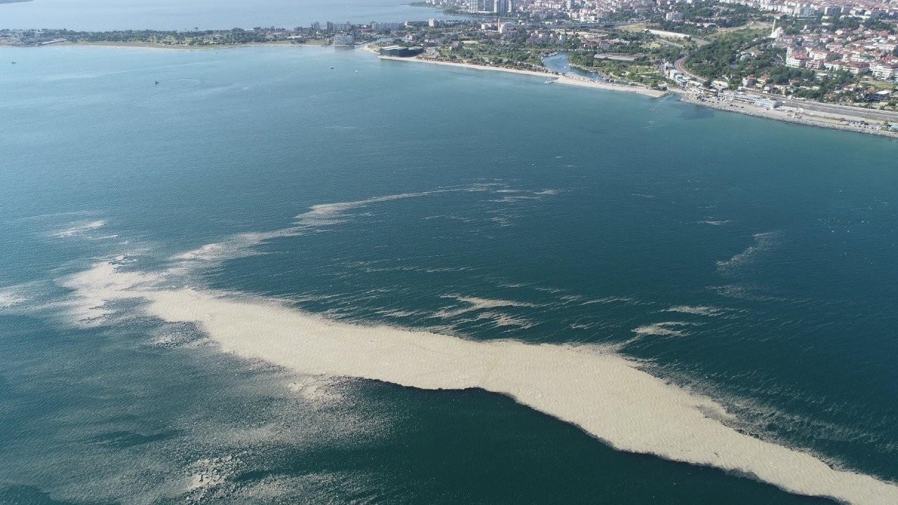 Müsilaj adası sahile yaklaşıyor