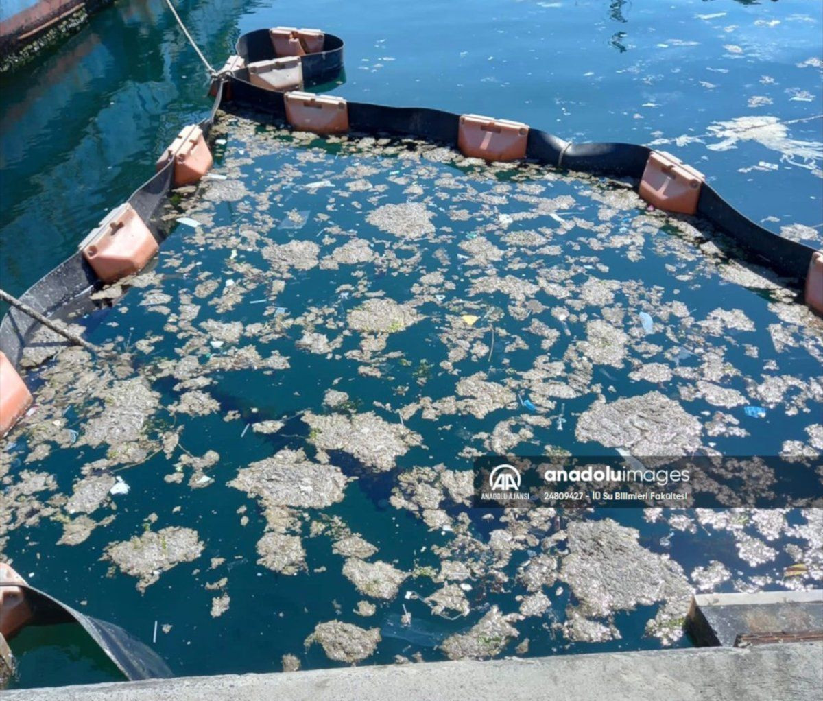 Müsilajı deniz bakterileriyle temizleme deneyinde başarılı sonuç - Sayfa 3